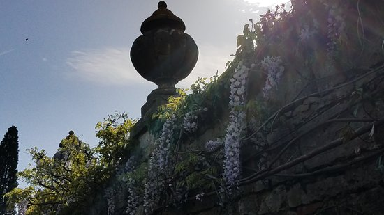 La Foce: the wisteria