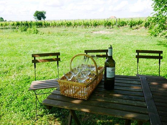 波尔多bordovino品酒一日游照片