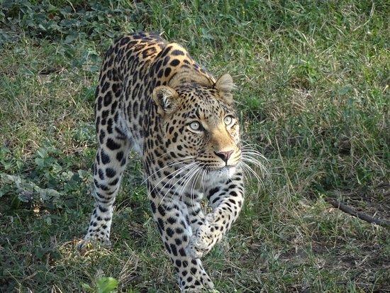 The Vuyani Safari Lodge: Moholoholo rehab centre
