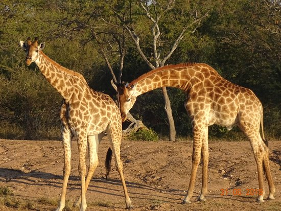 The Vuyani Safari Lodge照片