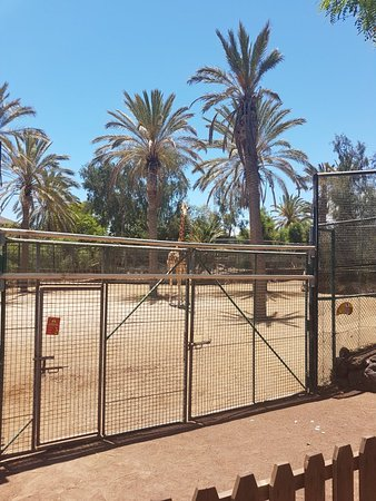 Oasis Park Fuerteventura照片