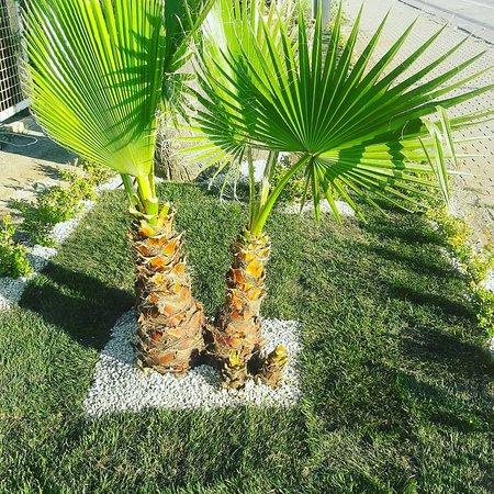 Ristorante Flora照片