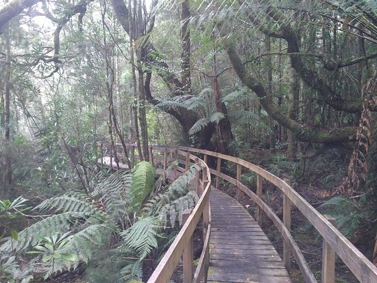 Tahune Adventures: Well done wooden walk ways along river path