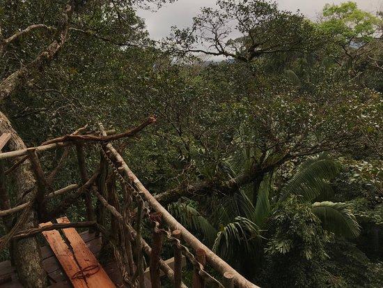 Orito, โคลอมเบีย: Desde el balcón de la habitación doble sobre las copas de los árboles!