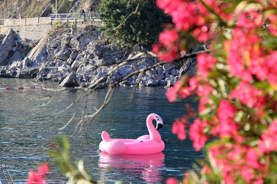 Dukley Beach Lounge: Flamingo at Moet & Chandon beach