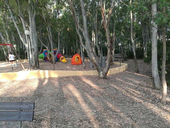 Serene Village: bosco di eucalipti