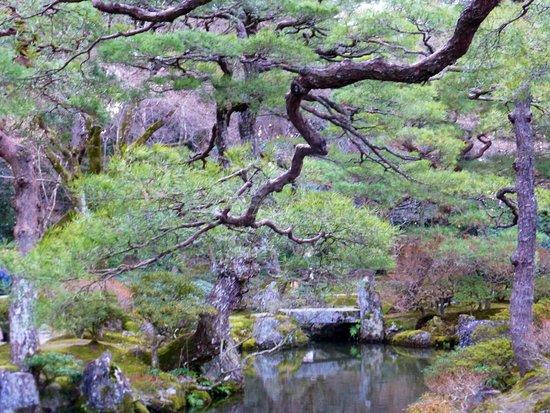 Kyoto Daily Tours: Cartoline da Kyoto, Giappone