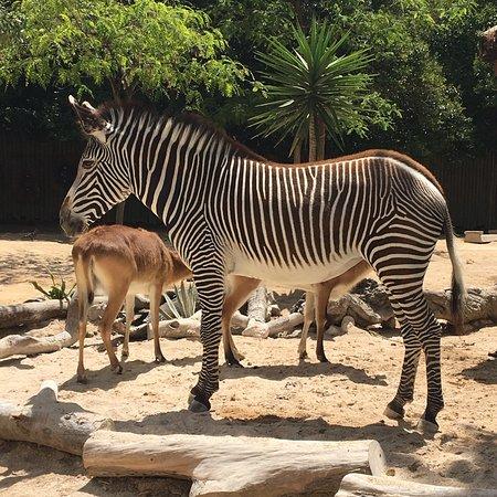 Jardim Zoologico ภาพถ่าย