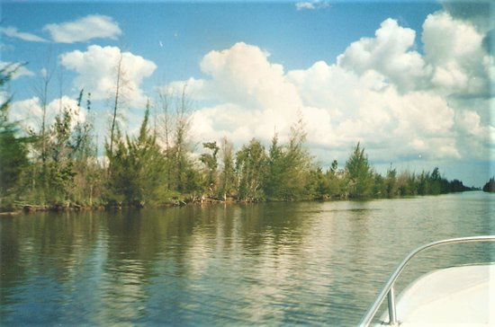 Zapata Swamp照片