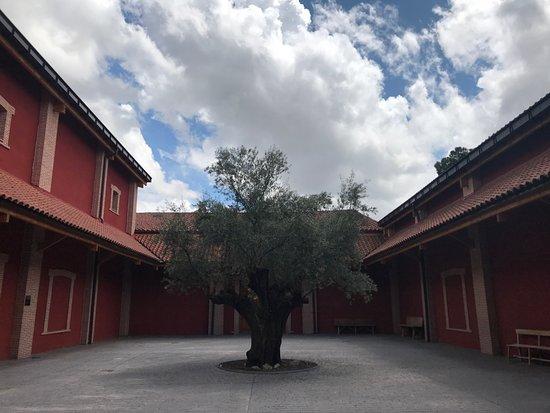 Finca Villacreces: Un olivo tricentenario en un patio interior de la finca