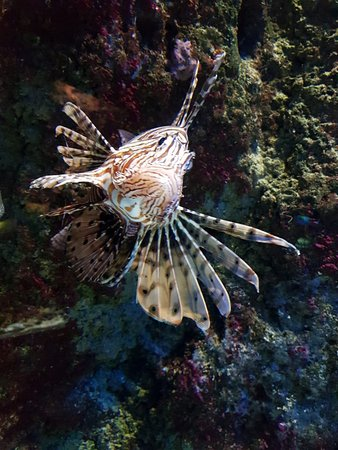 Aquarium donostia san sebastian san sebasti n donostia - Aquarium donosti precio ...