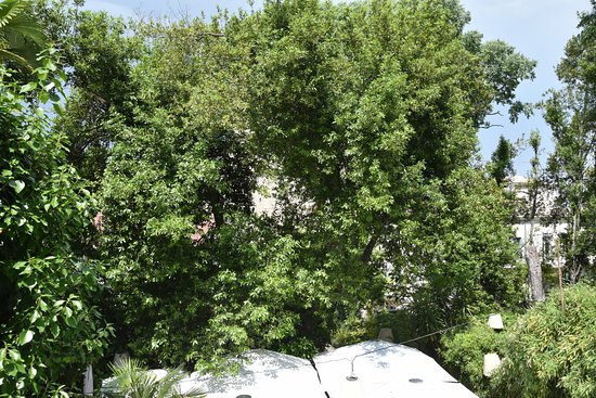 """Best Western Hotel Le Guilhem: This is the """"view"""" from the terrace.  The view is blocked by a big tree."""