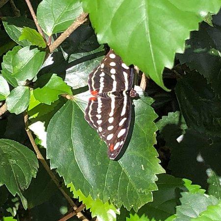 写真Mariposario Tambopata枚