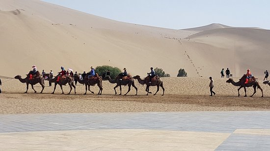 Mingsha Mountain: Camels riding across the sand dunes