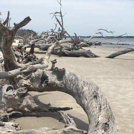 Foto de Driftwood Beach