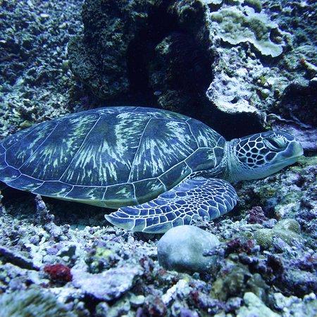 Manta Dive Gili Air ภาพถ่าย