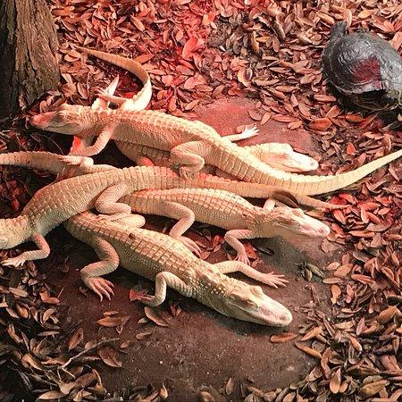 Foto de St. Augustine Alligator Farm Zoological Park
