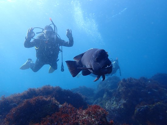 Izu Oceanic Park Diving Center - I.O.P.: Fun Diving and Diving Courses