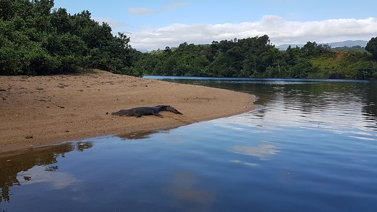 Bank 3 Meter.3 Meter Croc On The Bank In The Morning Picture Of