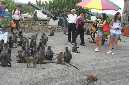 Passeio noturno de macacos e...