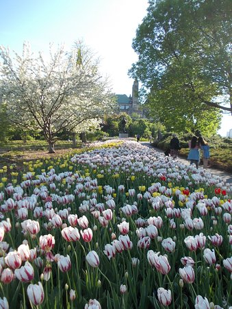 Major's Hill Park: just missed tulip week