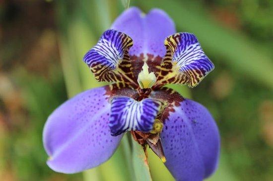 Pha Tad Ke Botanical Garden Admission Ticket