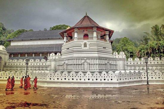 2 dagstur till Kandy & Nuwara ...