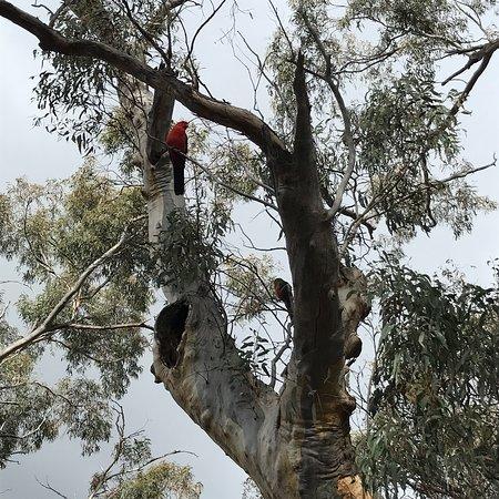 Australian National Botanic Gardens Photo