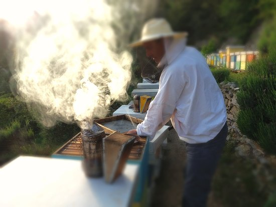 Honey shop Damir Tafra: working at apiary