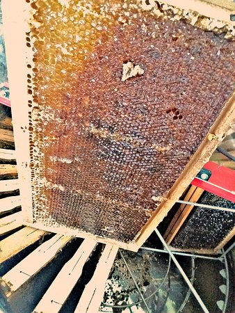 Honey shop Damir Tafra: frame full of honey ready for extracting