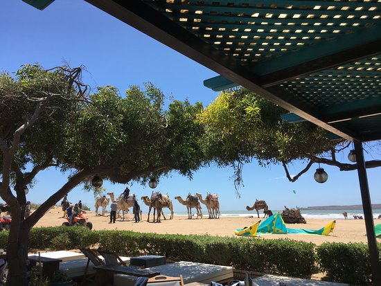 Morocco Immersion Tours & Adventures : View at lunch - in Essaouira