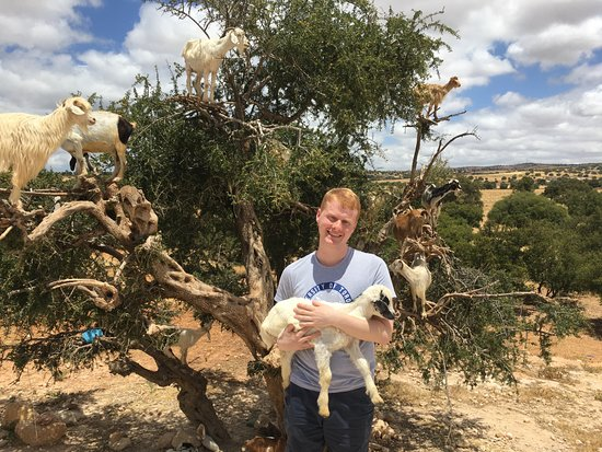 Morocco Immersion Tours & Adventures : Andrew with the tree goats!!!