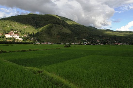 Thimphu District, Bhutan: Paddy field at Paro-