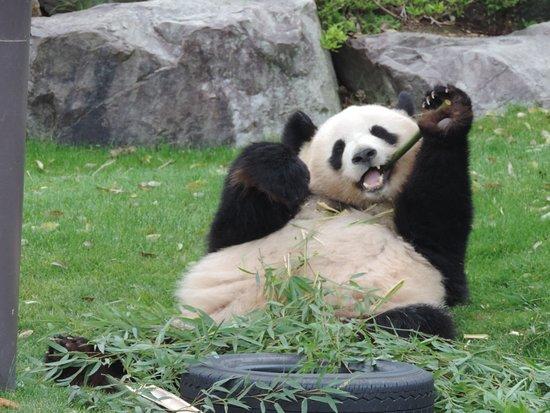 Adventure World: やっぱり熊です