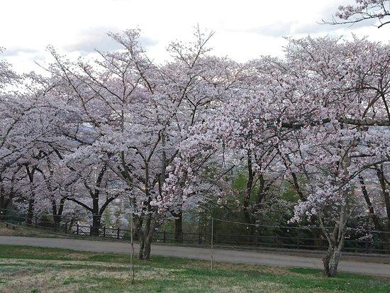 Omorijoyama Park