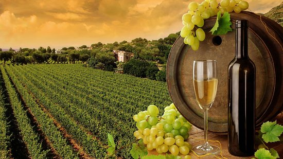 2in1 Tour: Wine Yards Visiting