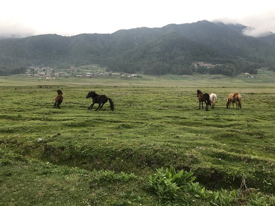 Phobjikha Valley Photo