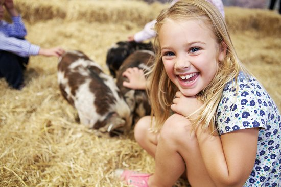 Cotswold Farm Park: Get up close to your favourite farm residents