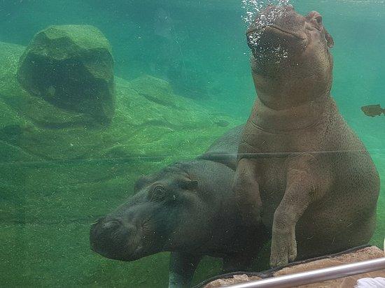 ZooParc de Beauval ภาพถ่าย