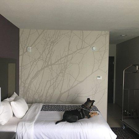 La Quinta Inn & Suites by Wyndham Lake Charles - Westlake รูปภาพ