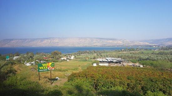 Tamar Bakfar