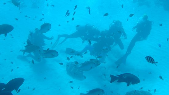 Outer Great Barrier Reef Snorkeling and Diving Cruise from Port Douglas照片