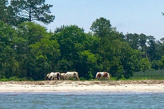 Saltwater Pony Tours Photo