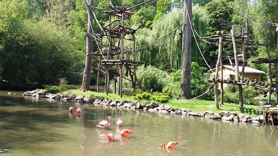 ZooParc de Beauval: Des flamants roses