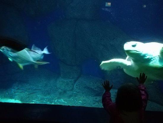 Zoo Aquarium de Madrid