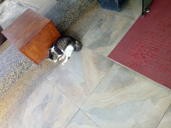 Telaga Terrace Boutique Resort: Cute kitty.