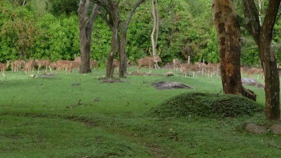 Jungle Hut: Deers outside the room