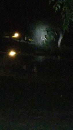 Jungle Hut: Wild elephant visit in the night