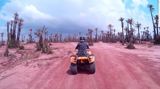 Marrakesh Quad Biking: Palm Trees