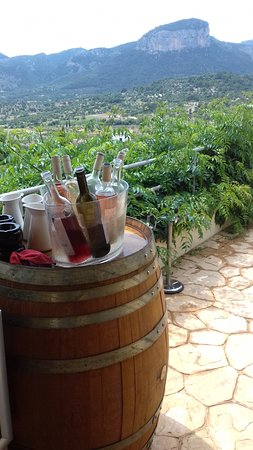Bodega Castell Miquel: This is the view from my table as I tasted several spectacular wines.